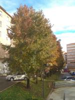 Colegio Pedro Velarde