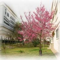 Instituto José M. Caballero Bonald
