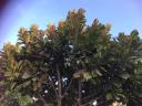 Centro Privado Green Tree de
