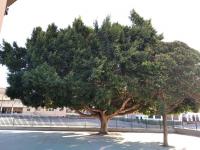 Colegio Juan Herrera Alcausa